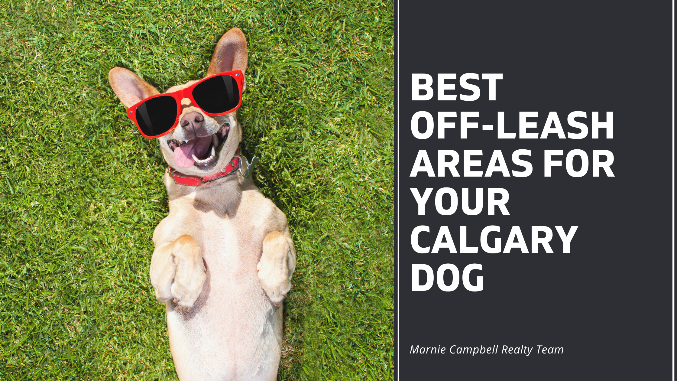 Best Off-Leash Areas for Calgary Dogs
